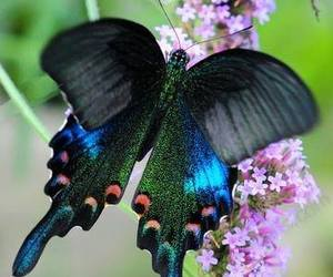 beautiful, butterfly, and flowers image