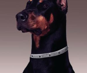 dog and doberman image
