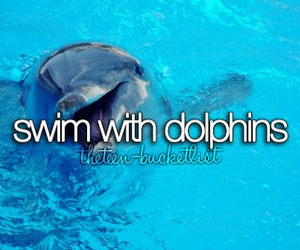 dolphin, swim, and bucket list image