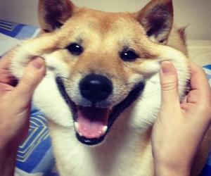 تفسير الكلب في الحلم   رؤية الكلب في المنام   رؤيا كلب بالحلم
