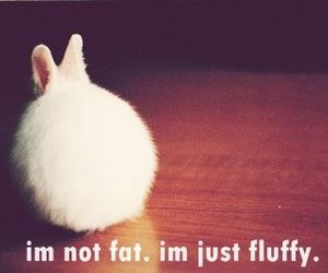 fluffy, cute, and bunny image