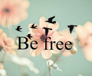 cute, be free, and birds image
