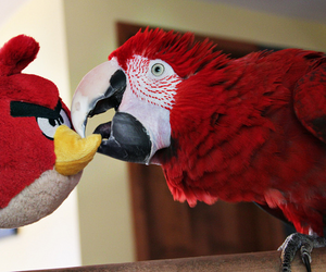 angry birds, bird, and parrot image
