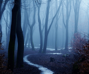 fog, mist, and forest image