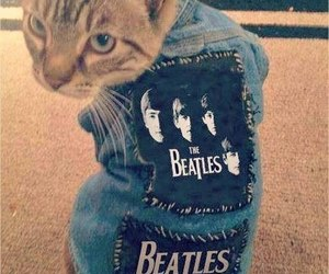 cat, beatles, and the beatles image