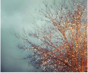 lights, tree, and cold image
