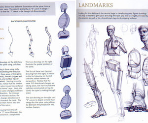 anatomy and art image