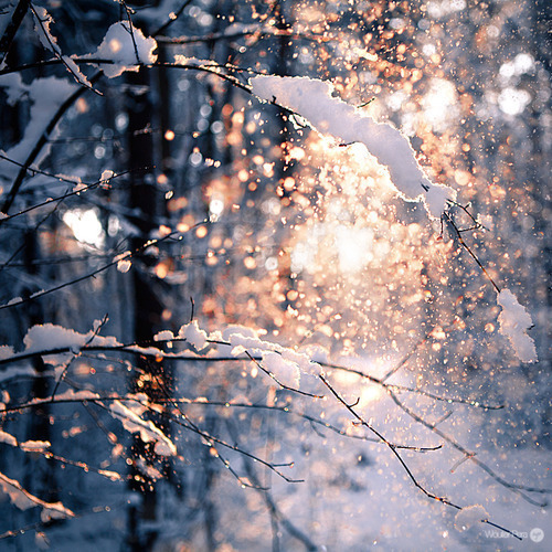 27 Images About Winter Christmas On We Heart It See More