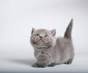 kitten, cats, and kittens image