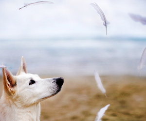 dog, feathers, and Sandy image