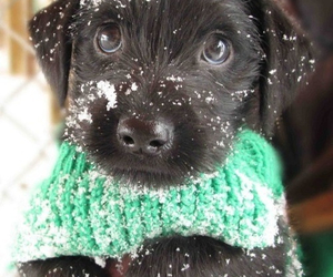 adorable, scarf, and black image