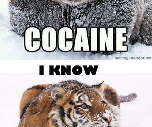 cocaine, bear, and funny image
