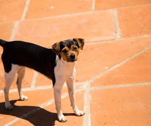 dog, fofo, and lindo image