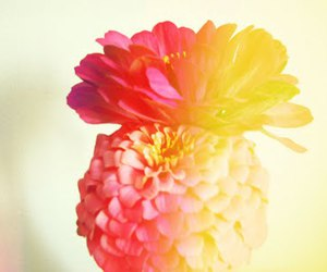 amor, colores, and flowers image