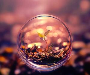 nature, plants, and bubbles image