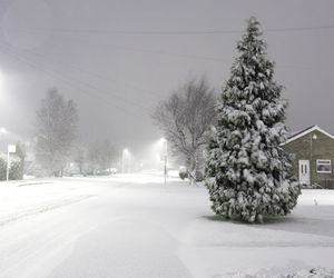 blizzard, snow, and tree image