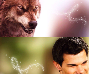 breaking dawn, eclipse, and jacob image