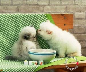 cat, kiss, and cute image
