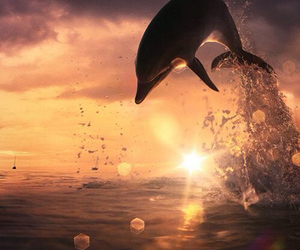 swag delfin cool sunset image