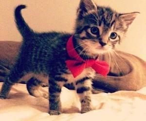 cat, ribbon, and sweet image