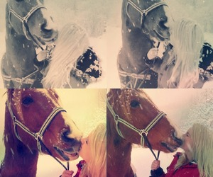 cold, horse, and kiss image