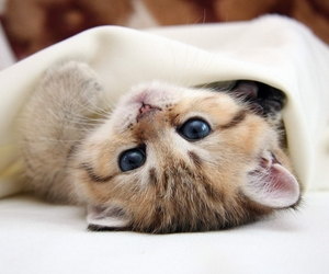 cat and sleepy image