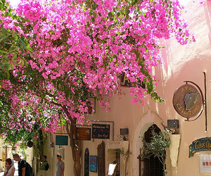 Greece, crete, and flowers image