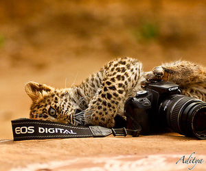 animal, camera, and canon image
