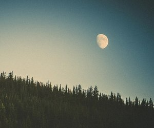 moon, forest, and sky image