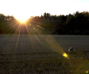dog, sun, and love image