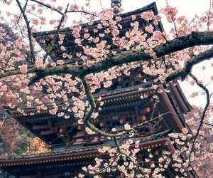 architecture, floral, and japan image
