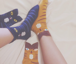 animal, fashion, and socks image