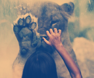girl, lion, and lioness image