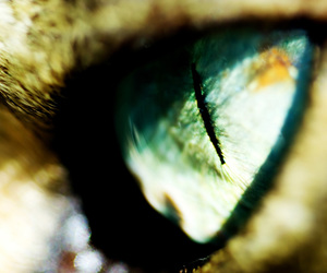 cat, eye, and green image