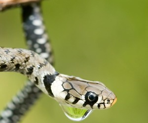 black, droplets, and reptile image