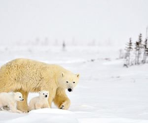 baby, cute animals, and snow image