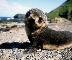 cute, seal, and animal image