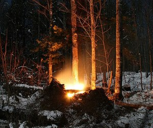 forest, snow, and fire image