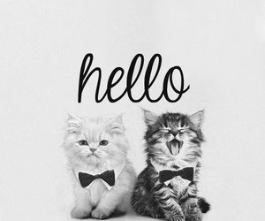 cat and hello image