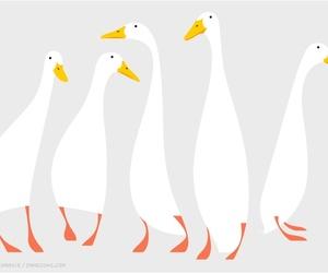duck, bird, and animal image