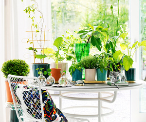 decoration, flowers, and furniture image