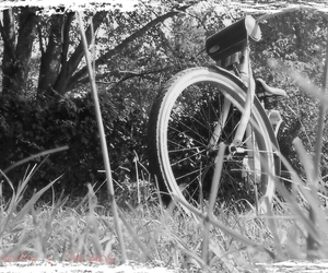 bike, summer, and black and white image