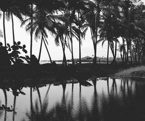 beach, palms, and black and white image