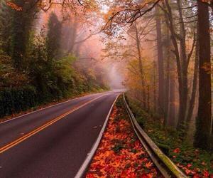 autumn, oregon, and beautiful image
