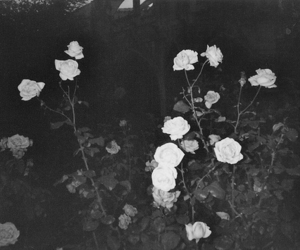 b&w, black & white, and flowers image