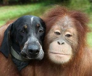dog and monkey image