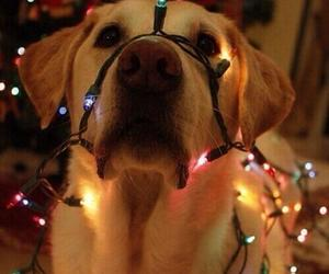 dog, christmas, and light image