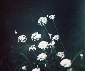 flowers, grunge, and nature image