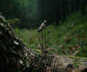 forest, fungus, and woods image