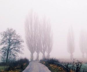 fog, grunge, and tree image